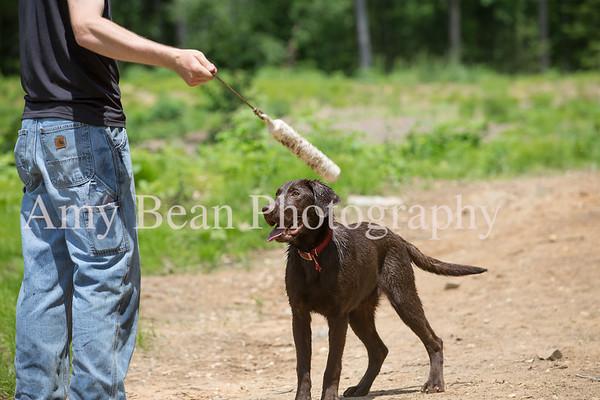 Dog Training 6/2/18