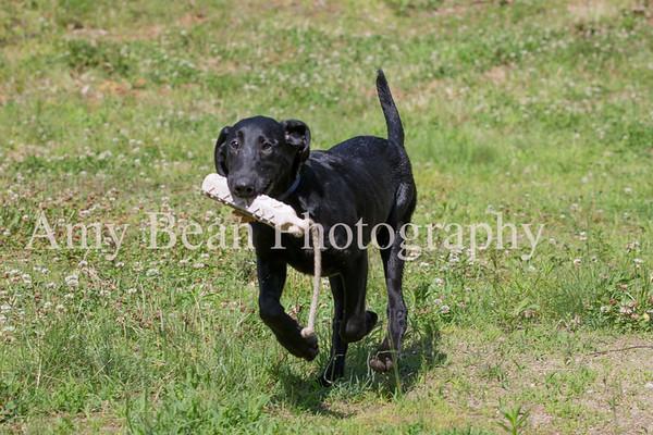 Dog Training 6/30/18