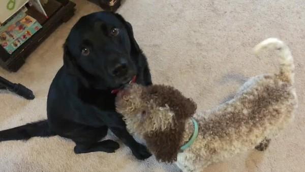 Millie Training Video