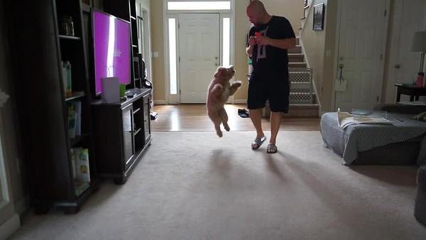 Murphy Training