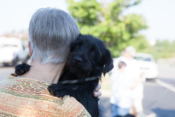 Dog Transport 8-22-13