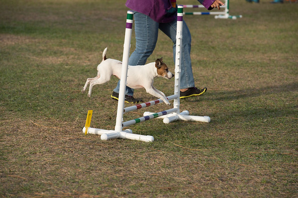 Pawsitive Action Agility 2-4-17