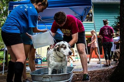 Dog Wash Season 2018: September