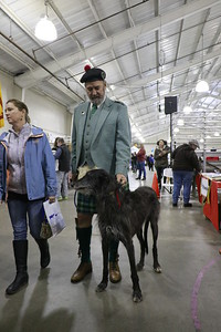 Six-year-old Scottish deerhound Colin and kilt-wearing owner Bayard Smith took part in the parade of breeds at the 30th annual Dog Expo at Redwood Acres in Eureka on Sunday afternoon. (Hunter Cresswell - The Times-Standard)