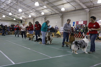 The working dogs of the parade of breeds during the 30th annual Dog Expo at Redwood Acres in Eureka on Sunday afternoon. (Hunter Cresswell - The Times-Standard)