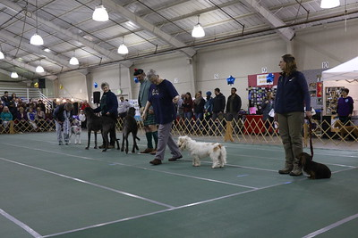 Five dogs walked in the hound category of the parade of breeds at the 30th annual Dog Expo at Redwood Acres in Eureka on Sunday afternoon. (Hunter Cresswell - The Times-Standard)