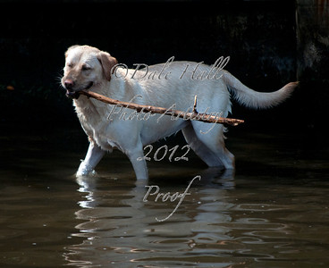 Amy with stick walking