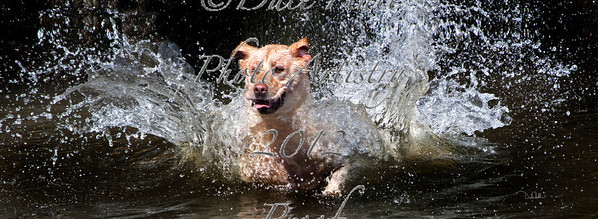 Bubbly sig 1for fine art am