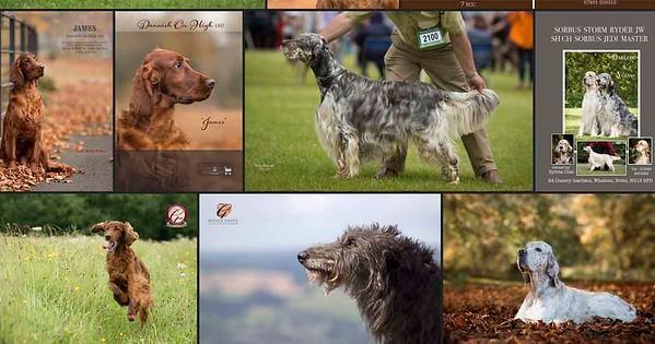 dog show photos