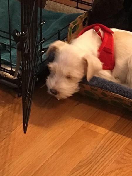 Nov 24 2016 new puppy.