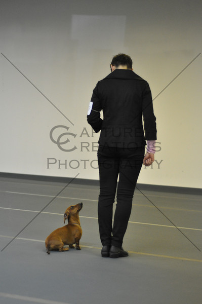 DCGS 2011: Saturday Sweeps, Jrs, Veterans, Obedience, and Candids