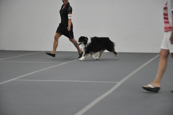 DDS2012 Sat AM Breed