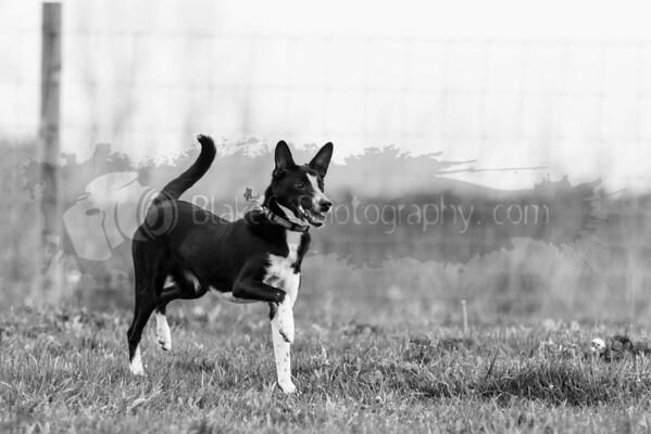 Dog Park-5-9-16_0011