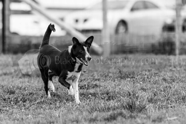 Dog Park-5-9-16_0009