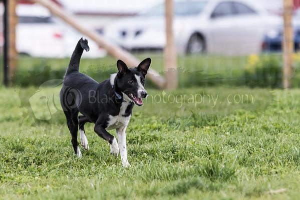 Dog Park-5-9-16_0010