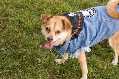 Rusty, the biker dog!