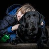 Dog Photographer Andy Biggar Photography Portrait of a Labrador