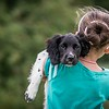 Dog Photographer Andy Biggar Photographer