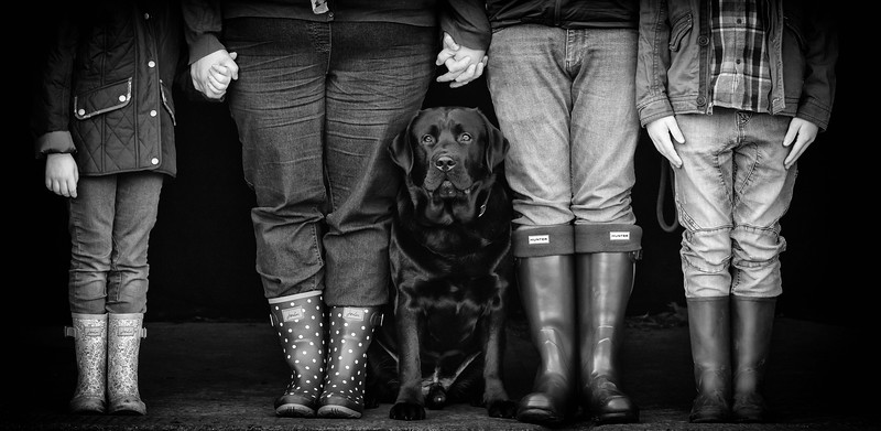 Dog Photographer  Andy Biggar Photography Portrait