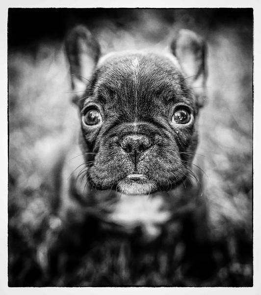 Dog Photographer Andy Biggar Photography