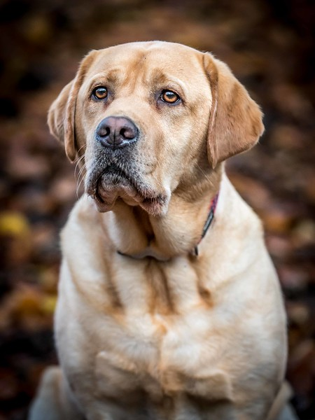 Dog Photographer by Andy Biggar Photography