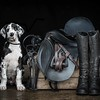 Dog Photographer Andy Biggar Photography Dog Portrait