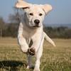 Dog Photographer, Dog Photography,Andy Biggar Photography