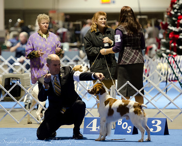 B 27 GCH BRIGADE'S HI HOPES ROCKET, JH , SR41073501 3/10/2007. Breeder: Michael Frane. By FC AFC Burford's Booked First Class -- Maison De Chasse Magnifique. Deborah and Michael Frane . Dog. Robert Scott, Agent.
