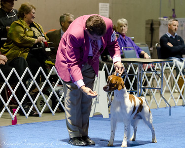 Our Rocket, GCH Brigade's Hi Hopes Rocket JH in Sporting Group Handler: Roger Kibbee