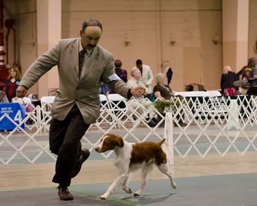 21 NAVAN , SR67320206 3/25/2011. Breeder: Mark Nunez. By CH Mitch MT The Suspense Is Over -- CH Firestorm's Wild Rose. Helen McHugh . Dog. Adrienne Owen, Agent.