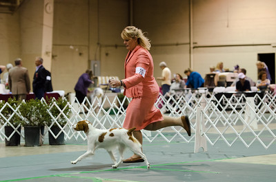 1st Best Opposite in Sweepstakes  20 SUNQUEST'S LITTLE COLORADO , SR68700905 7/5/2011. Breeder: Dee Hartnek, Melissa and Kimberly. Barwick By CH Sno-Kris Hi-Point for Sunquest -- CH Millette's French Vanilla. Susan Kerns and Natalie Simpson and Laura Altshuler. Bitch.