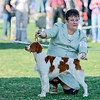 GCH Brigade's Hi Hopes Rocket JH  Handler: Lousie Brady    Palm Springs KC - Select Dog<br /> Rocket finished 2011 with 63 Grand Champion Points. National ranked 23 out of the top 100 Brittanys and ranked 5th in California.