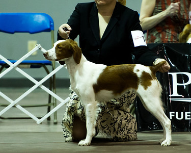 2013 American Brittany Nationals