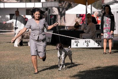 2013 Santa Barbara Dog Shows