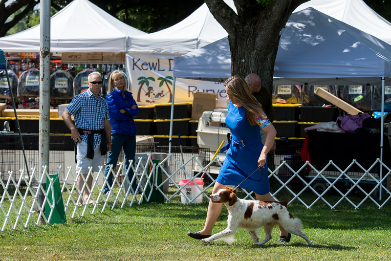 SEL <br /> (5 GC Points)29GCH SHELTTANY AGAINST ALL ODDS. SR 47517503. 09-30-07<br /> By Ch Castle One In A Millennium JH - Shelttany's Itsy Bitsy. Dog. <br /> Owner: Robin Tomasi, Middleton, ID 836445957. Breeder: Emma Doucette & Carol Luxton.