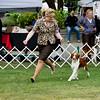 2/R <br /> 9TRU'S ASTERIX THE REDD. SR 74334006. 08-22-12<br /> By GCH Tru's Redd Baron Of Willowick JH - Tru's Lucky Charm. <br /> Owner: Jessica Fairchild & Kai Broms, San Anselmo, CA 94960. Breeder: Marc F Rittner & Vicki Rittner & Jan Kilpatrick