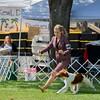 57DC COPLEY'S RED RIVER. SR 66012503. 01-09-11<br /> By GCH Copley's Looks Good On Paper - Ch Copley's Millennium Martini. Dog. <br /> Owner: Mary Brown & Shellie Sytsma, Atascadero, CA 93422. Breeder: Robin Tomasi & Barbara Dayton & Alex Findlay & Emily Fuzette.