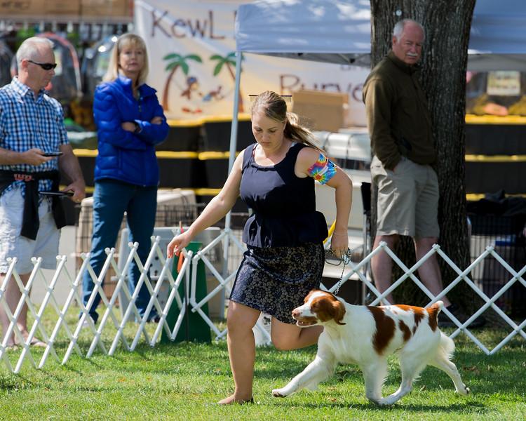 B <br /> (5 GC Points)31GCH DREAM HI'S DON'T HATE THE PLAYER HATE THE GAME. SR 69396203. 09-06-11<br /> By GCH Mich's Mt Ready Aim Fire - GCH Castle's Sleeping Beauty Zoei. Dog. <br /> Owner: Tom & Lori Rickard, Bella Vista, CA 960080888. Breeder: Joseph Ramondetta.<br /> (Kristina Rickard, Agent).