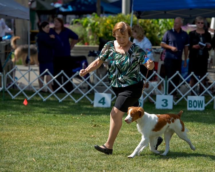 HOPE'S EXCEEDING THE SPEED LIMIT. SR 74550402. 08-24-12<br /> By GCH Tonan-Hope's RU Kiddin' Me - Ch Triumphant's More Than A Memory. Dog. <br /> Owner: Nancy Hewitt & Douglas Tighe, Bellflower, CA 90706. Breeder: Douglas Tighe & Kim Tighe.