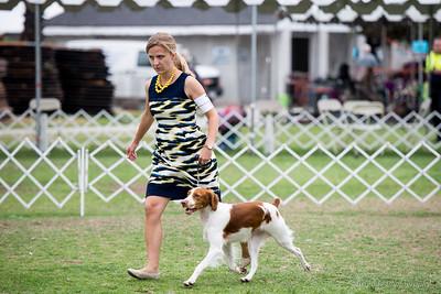 2015 Beverly Hills Kennel Club - Brittanys
