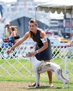 2015 Long Beach Kennel Club-Whippets