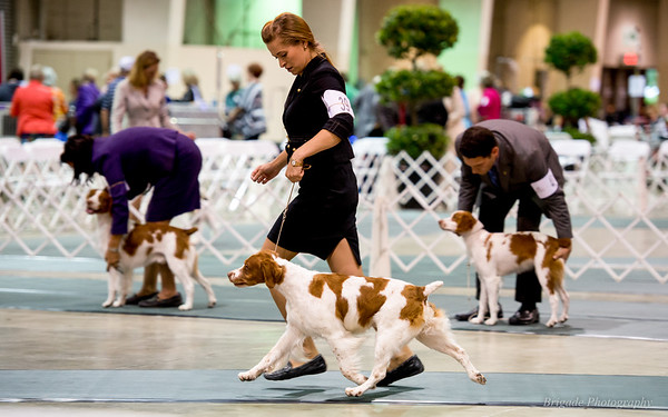 Veteran/Best of Breed GCH Brigade's Hi Hopes Rocket MH handler Lauren Hay-Lavitt