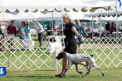 2015 Southern California Sporting Dog Fanciers Show