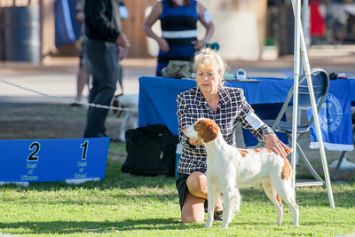 WHISPER RIDGE LOTS A CLASS 'N MORE SASS , SR87628701 4/14/2015. Breeder: Sue Richards & Joy Ory. By GCH DC Ory's Marshall Dillon -- CH Whisper Ridge Spys Like US. Sue C Richards and Stephanie Kepler-Young . Bitch.