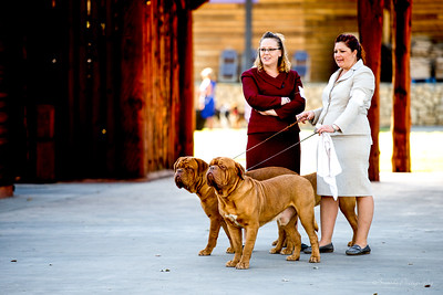 French Bullies ready to show