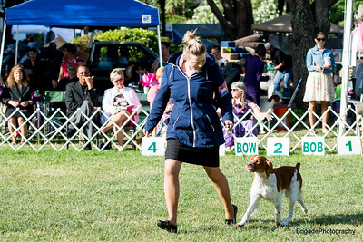 2016 Woofstock California Brittany Club Supported Entry