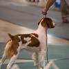 1/W/BW      15 HOPE'S EXCEEDING THE SPEED LIMIT , SR74550402 8/24/2012. Breeder: Douglas and Kim Tighe. By GCH Tonan-Hope's R U Kiddin' Me -- CH Triumphant's More Than A Memory. Nancy Hewitt and Douglas Tighe . Dog