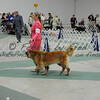 2012-04-28AKC Burch Run09
