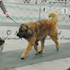 2012-04-29AKC Burch Run06