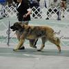 2012-04-29AKC Burch Run05